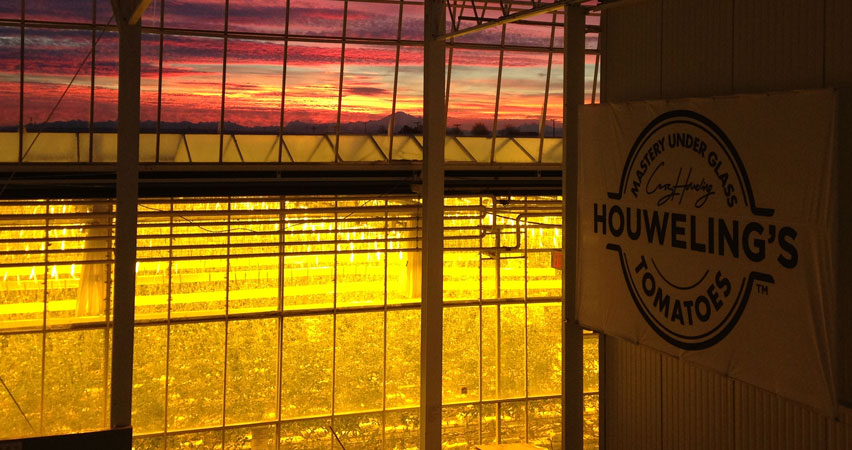 Houweling's tomatoes greenhouse with yellow lights in the pink sunset